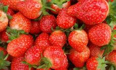 茂发盛全家福红颜4斤草莓