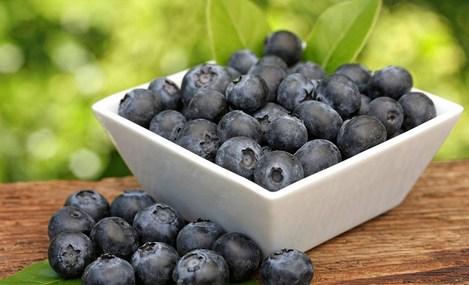 野生蓝莓专卖