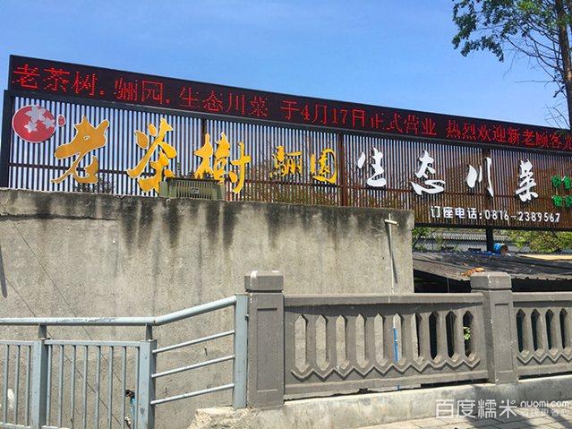 老茶树骊园生态川菜