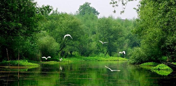 西溪湿地东区