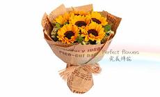 完美鲜花6朵向日葵花束