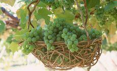 响呱呱生态葡萄园