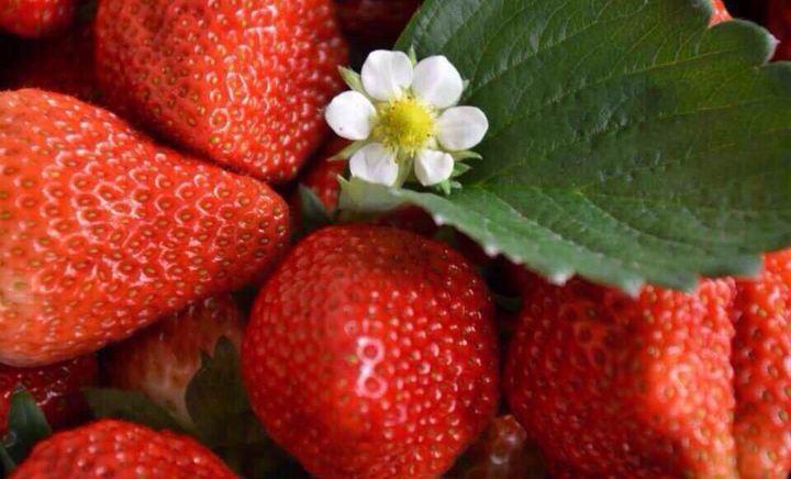 美源草莓樱桃采摘园