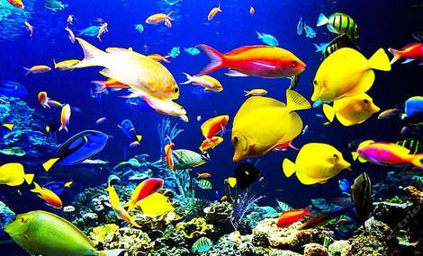 康辉国际旅行社极地海洋世界