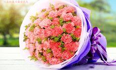 玫瑰传情33朵康乃馨鲜花