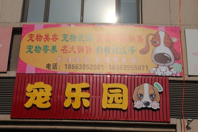 宠乐园宠物连锁机构
