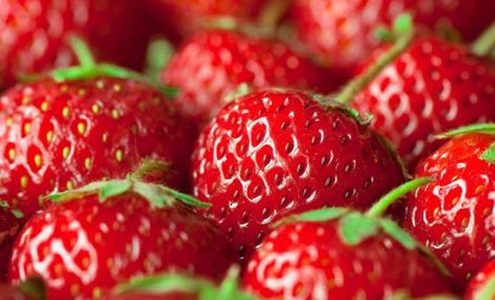 老刘草莓采摘