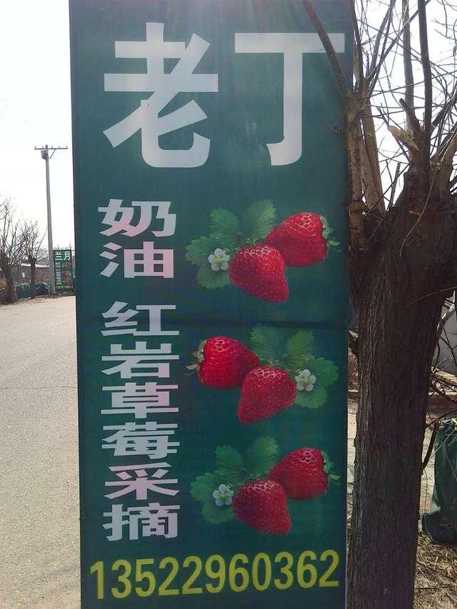 老丁草莓采摘园