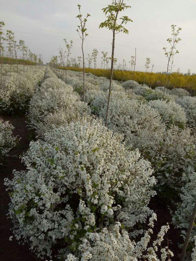 春波绿化培植园