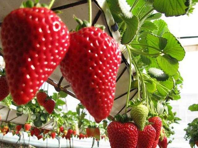 普迪草莓生态园