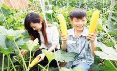 阖家小院有机蔬菜采摘1斤