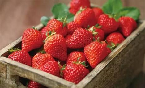 同心草莓采摘园