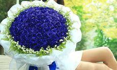 爱琴海99朵蓝色妖姬花束