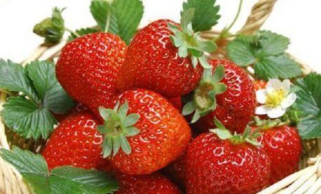 田园草莓采摘基地