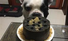 堂纳宠物蜂窝煤宠物蛋糕