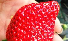 老孟草莓采摘1斤