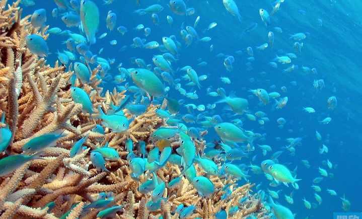 大东海百乐国际潜水