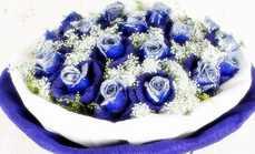 卉香园19朵蓝色妖姬花束