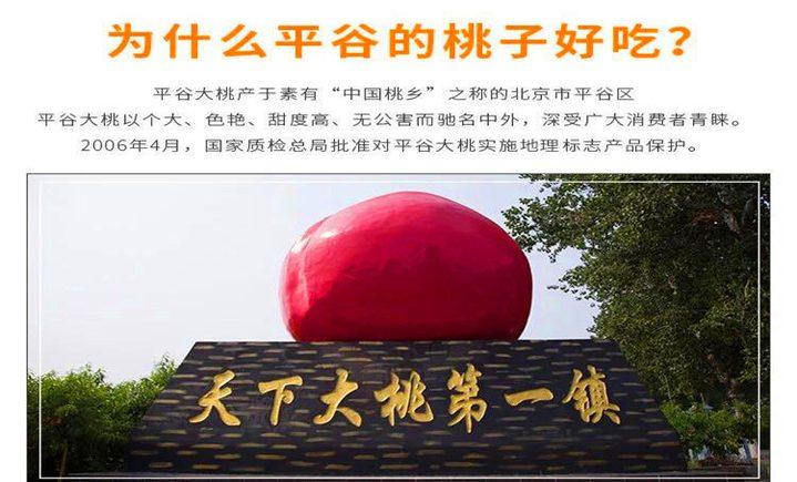 平谷十里桃源大桃采摘园