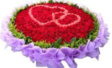 花引365朵玫瑰