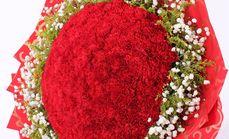 卉香园99朵红色康乃馨花束