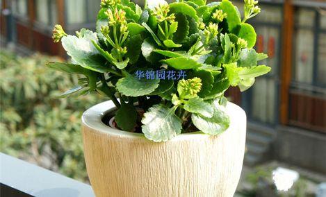 华锦园花卉