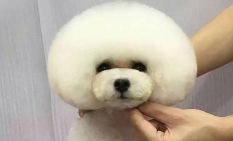 【房山】望康高端宠物美容与培训