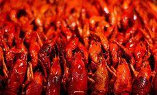秘辣一堆小龙虾