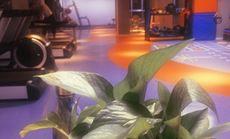 橘猫健身工作室