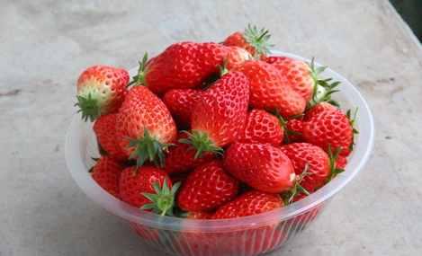 刘师傅草莓采摘园 - 大图