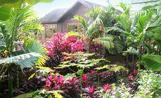呀路古热带植物园单人门票