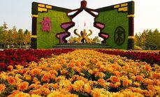 鲜花港菊花文化节成人套票