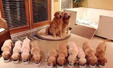 Q宠宠物SPA会所