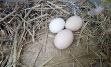 鸣晨山舍油鸡鸡蛋