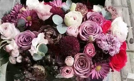 七色堇鲜花