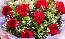 红玫瑰小熊套餐