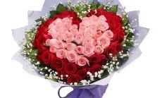 费罗拉66朵玫瑰花