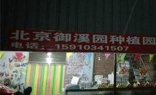 北京御溪园种植园柴鸡蛋