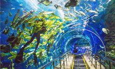 北京太平洋海底世界学生票