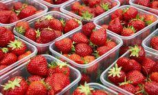 天野草莓(教工路店)