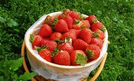 优优草莓园