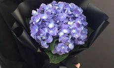 绿七洲花卉11支洋桔梗花束