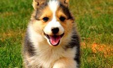 忠诚宠物小型犬寄养