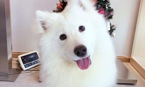 HiGo嗨够宠物生活馆