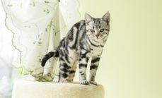 七家宠物店猫咪洗澡