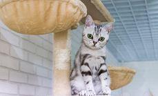 克拉少爷猫咪美容