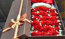 清新鲜花康乃馨礼盒