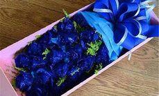 清新鲜花蓝色妖姬套餐