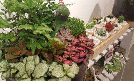 8790多肉DIY艺术品店