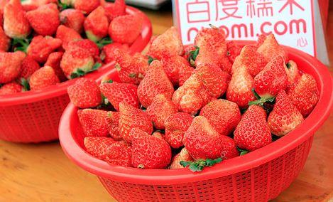牛牛草莓采摘园